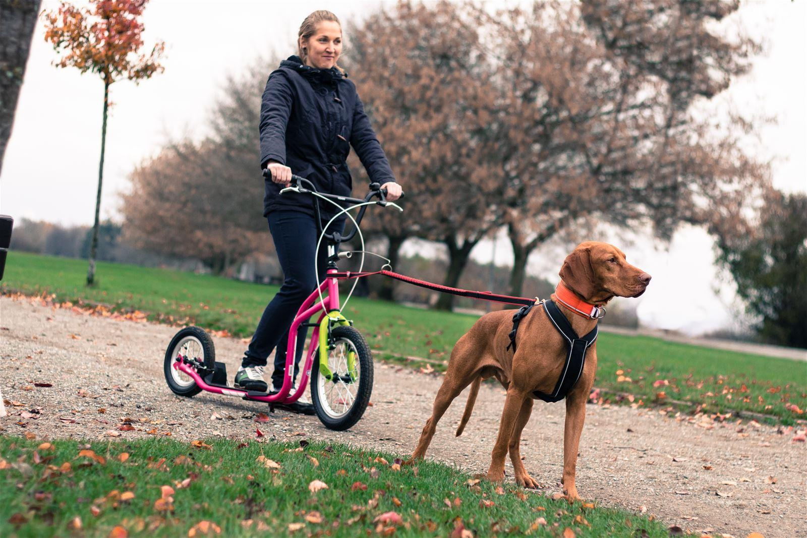 Yedoo new City mit Bikeantenne als Dogscooter